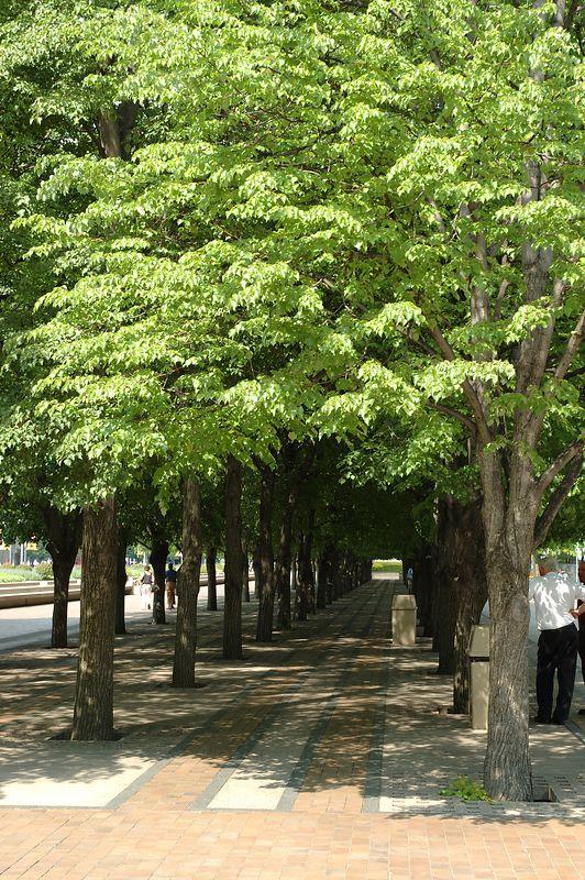 Church of Christ Scientist.<br/> Tree Line.