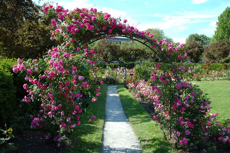 Back Bay Fens<br/> Rose Garden (5