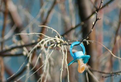 Blue Binky in a Tree