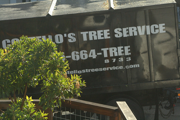 Costello's Tree Service