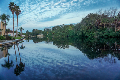 Dog Play, New Port Richey River Walks, Dulcet Grand Opening 12 31 2014