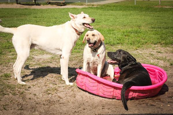 DrLight, Dogs, Health Fair, New Port Richey, 5 16 2014, @Keth Luke 20014