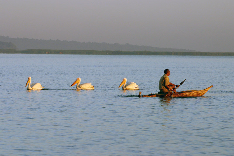 pelicans and fisherman, lake tana, near bahir dar, ethiopia