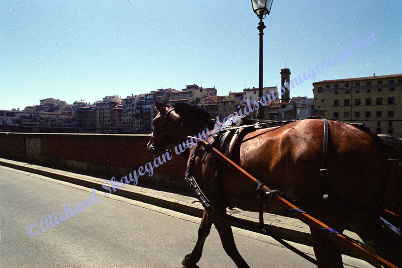 Florence Pisa horse drawn carriage