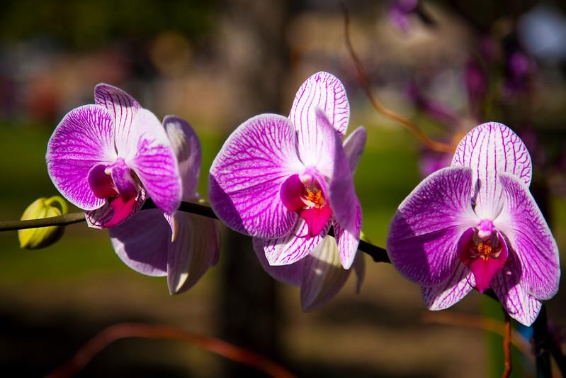 Cat.#0141 - Orchids #2. Farmers Market. Downtown Austin, TX.