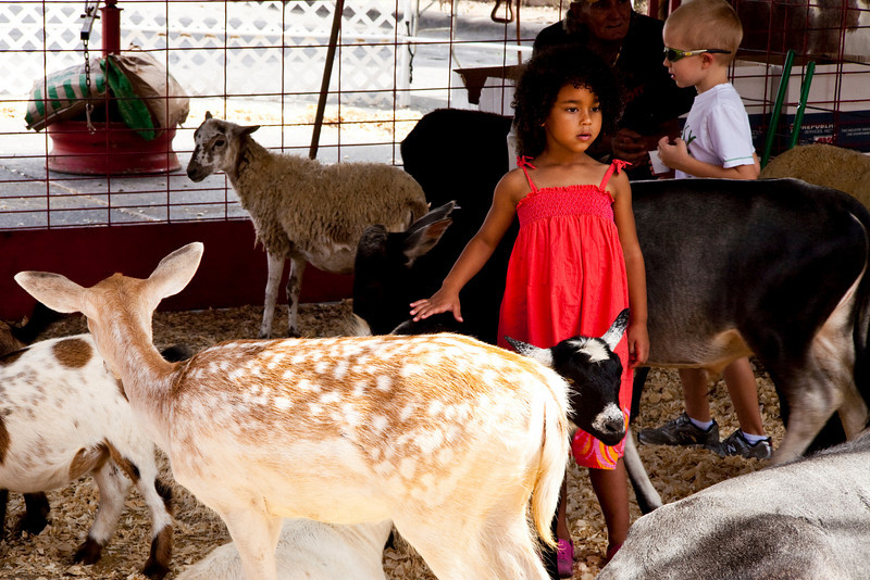 Peaceable Kingdom In A Cage. Petting Zoo At The Pecan Street Festival. Austin, Texas