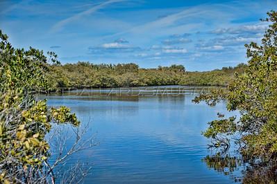 Fisheye Pond, Clearwater Florida