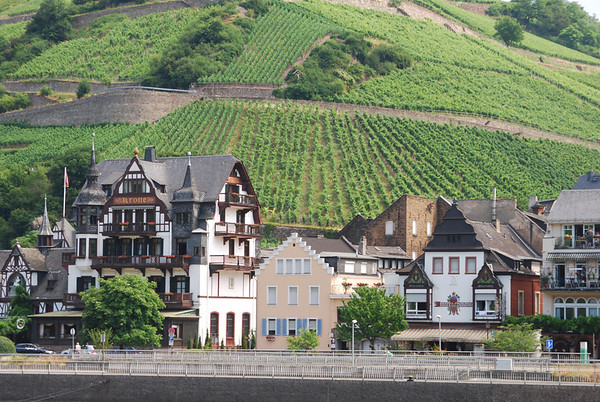town and vineyards Rhine River