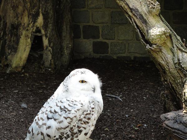 Owl at Luisenpark