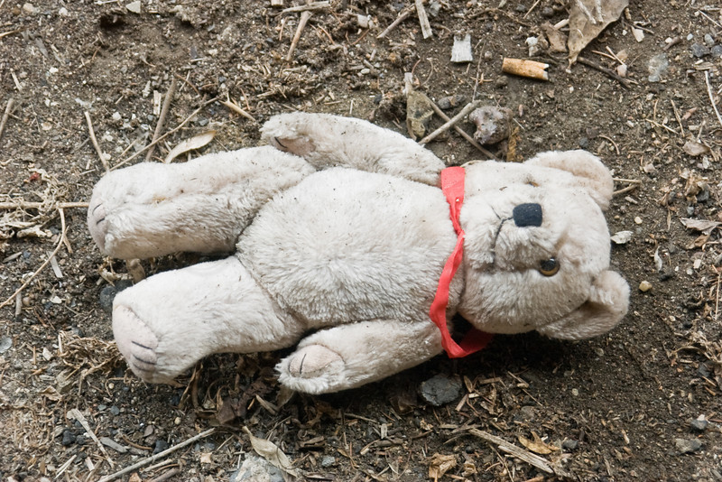 Discarded Teddy Bear