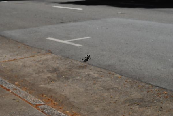 Crazy Huge Spider