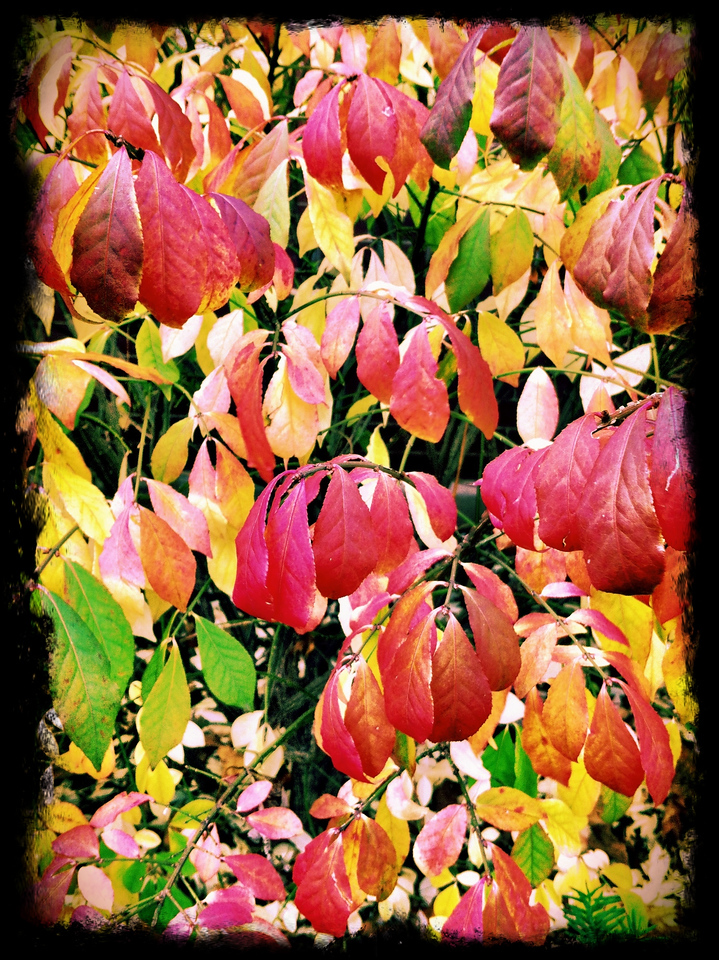autumnal (iPhoneography)