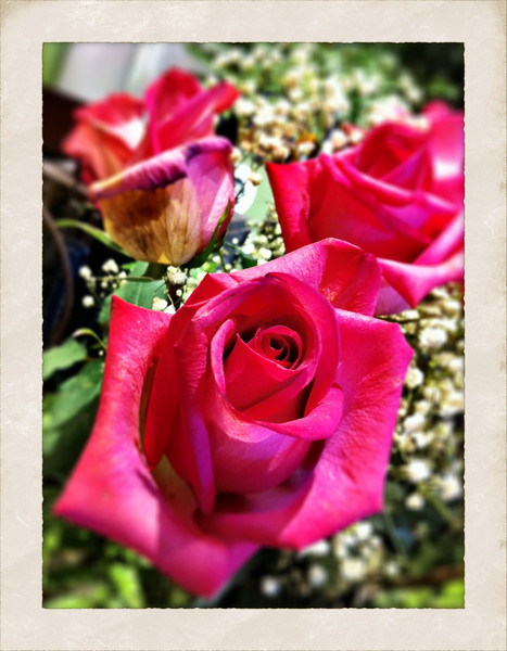 tasty (iPhoneography)