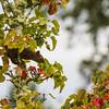 Squirrel and lichens
