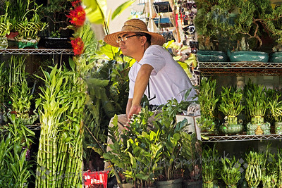 The Bamboo Merchant ~ This sidewalk shop featured various things, but the bamboo was most prominent.  Bamboo is considered lucky, and can be purchased in very large to very small plants.