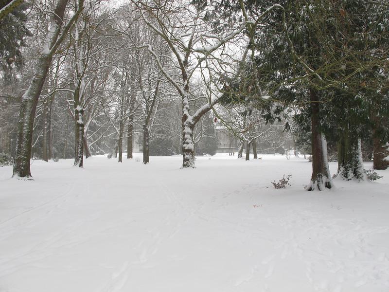 The wonderful trees in Volunteer Park.