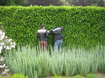 Filoli Gardens - 05.31.08