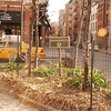 NYC Greenspace