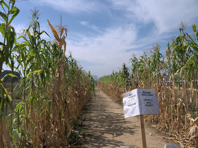 Los Angeles State Park, cornfield