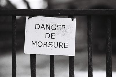 danger de morsure