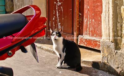 Montmatre pavement and black and white cat, Paris, France.