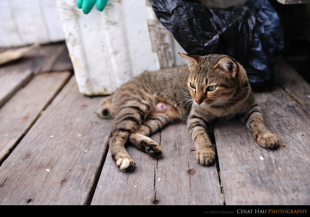 The kittie resting - She is a mom for one