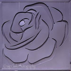 wDSC_4344 Rose