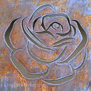 wDSC_4346 rose