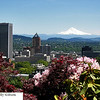 Mt. Hood, Portland Skyline and Rhododendrons