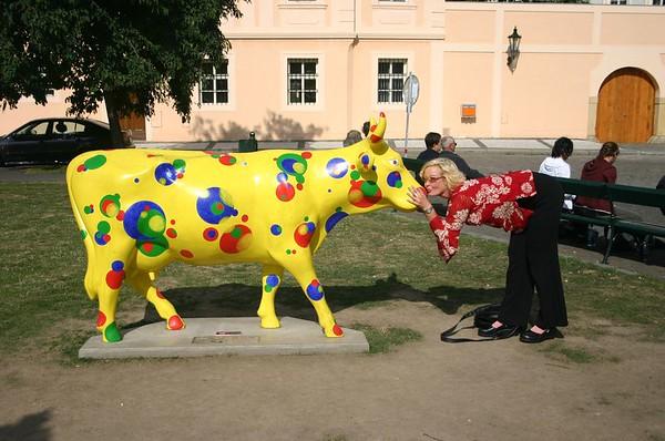 Prague Cow shots