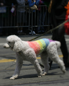 Poodle, SF Pride, June 2008