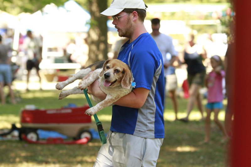 The St. Louis Festival of Nations at Tower Grove Park!  It was a little warm and the beagle looks a bit older.  Cyndy said a while before that it was too hot out for this particular dog.  Sometime later we saw her being carried while her two companions are trotting along side.  She had plenty of water offered.  She reminds me of Red.