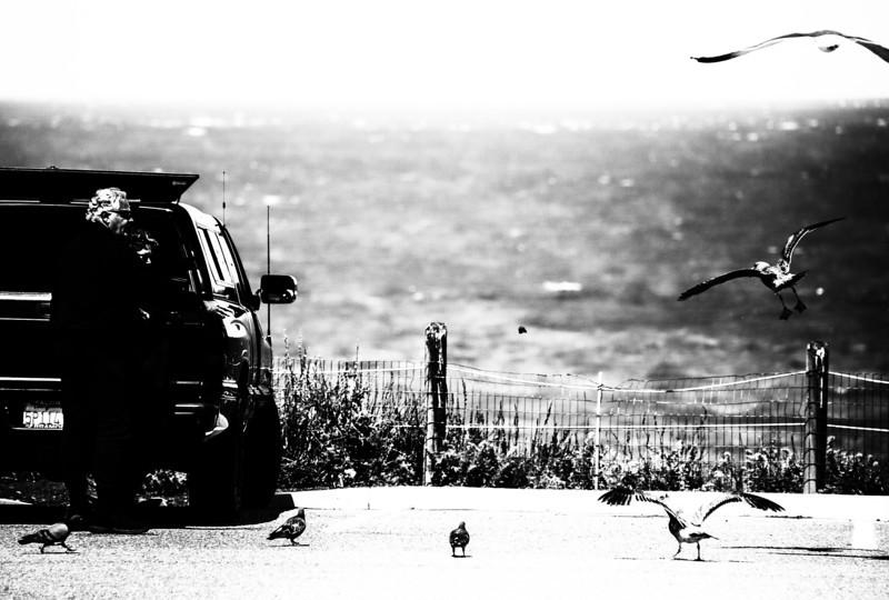 Feeding the seagulls- Baker Beach, San Francisco.