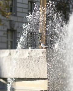 Civic Center Fountain, San Francisco, October 2009