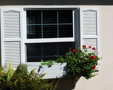 Geraniums in a Window Box