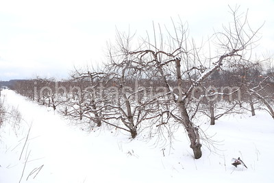 Winter Scenic Photo in Southington, Connecticut
