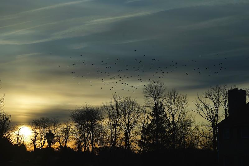 Early Birds (80mm, f7.1)