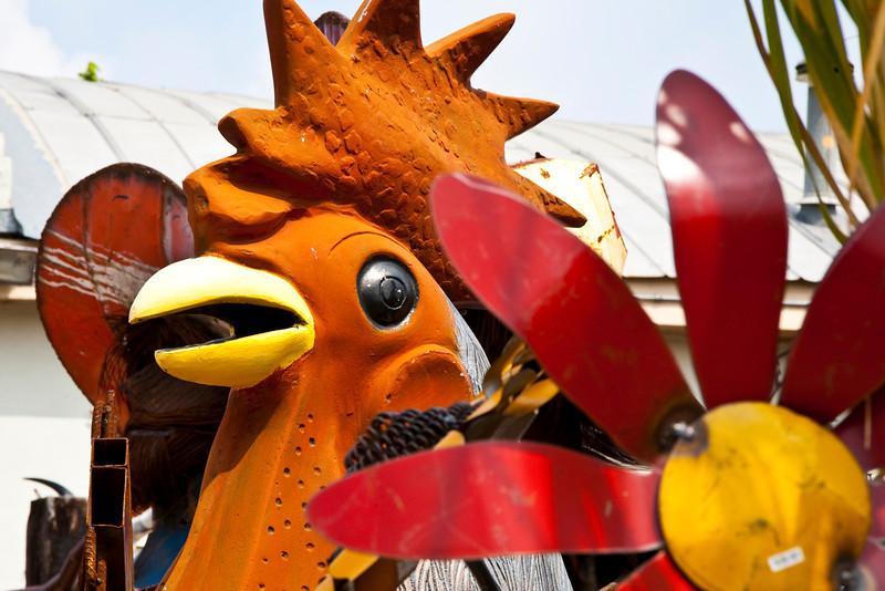 Large Rooster - Fredericksburg,Tx