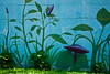 "Plant Mural South Austin, Texas.<br /> <br /> Purchase Prints, Framed Prints, Canvas Prints, Metal Prints, and on a Acrylic as well through this link - <br />  <a href=""http://fineartamerica.com/featured/plant-mural-with-live-plants-mark-weaver.html"">http://fineartamerica.com/featured/plant-mural-with-live-plants-mark-weaver.html</a>"