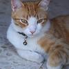 Leon, the Cat of Seville!