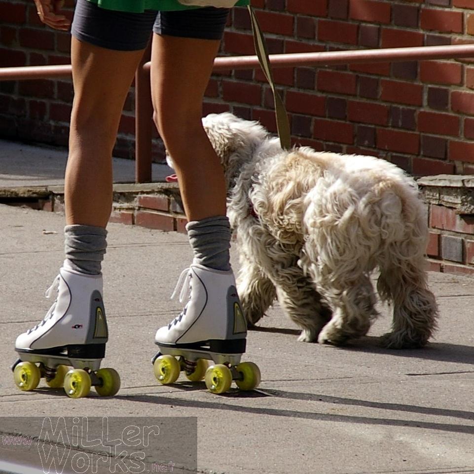 Who's walking whom?