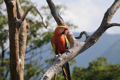 THE BIRDS - left angle.