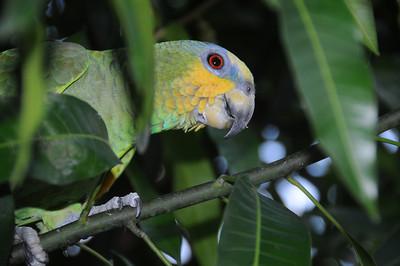THE BIRDS - Polly want ...