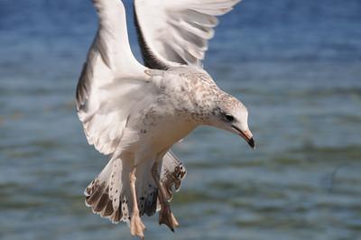 THE BIRDS - Rough landing.