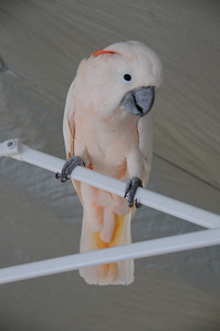 THE BIRDS - right angle.