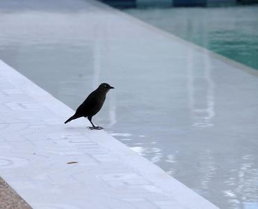 THE BIRDS - Should I or shouldn't I?