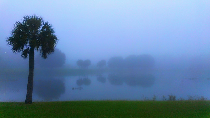 foggy morning in Armwood