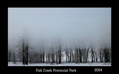 More from my epic fog day Feb 03 /04
