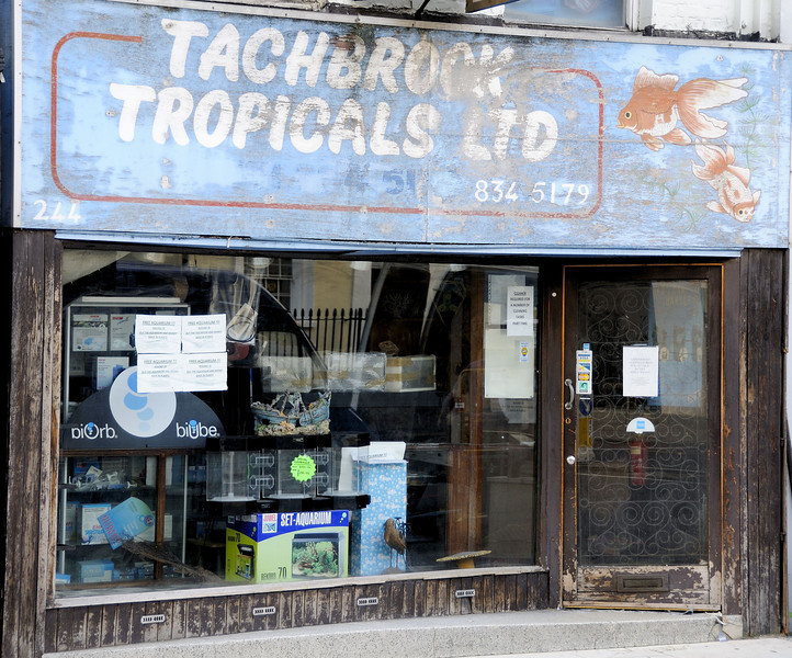 Tachbrook Tropicals, 244 Vauxhall Bridge Road, London