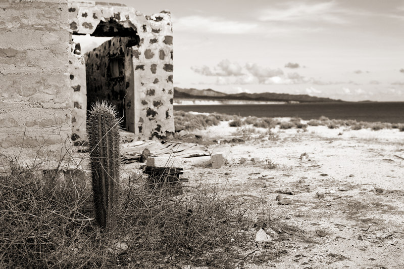 Cactus growing in the sands of an bandonded homestead on the beach a remote island in the Sea of Cortez.